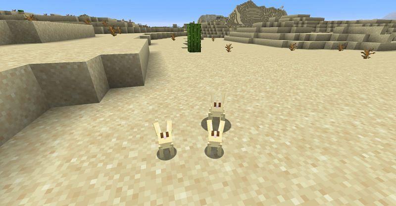 Rabbits in a desert biome in Minecraft. (Image via Minecraft)