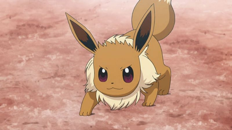 Eevee in the anime (Image via The Pokemon Company)