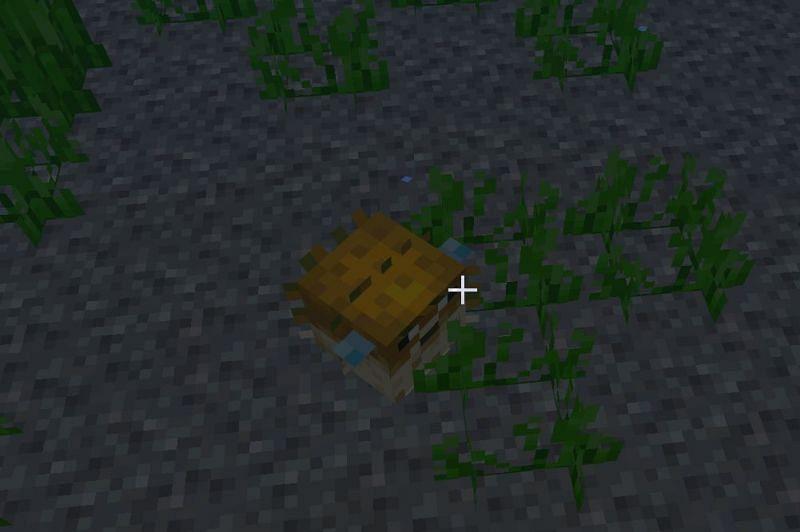 Behavior of Pufferfish in Minecraft