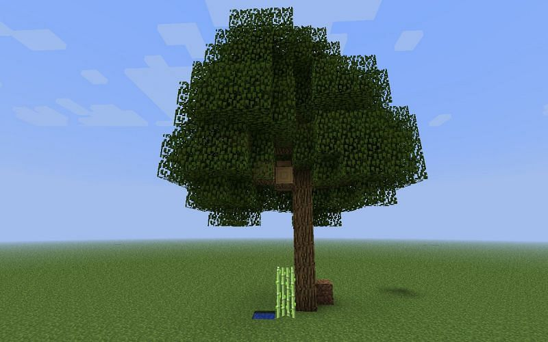 Minecraft oak tree (Image via minecraftforum)