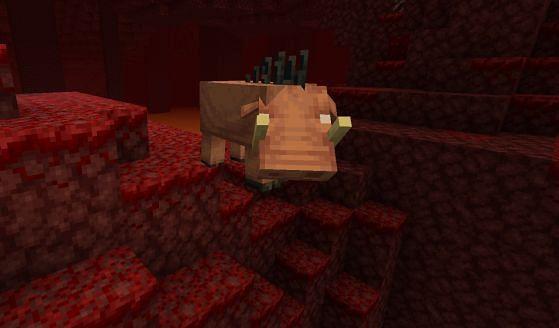 Minecraft hoglin in the Nether (Image via millenium)