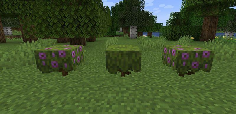 Azalea blocks (Image via Minecraft)