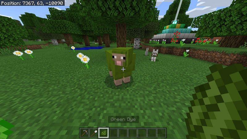 You can dye a sheep