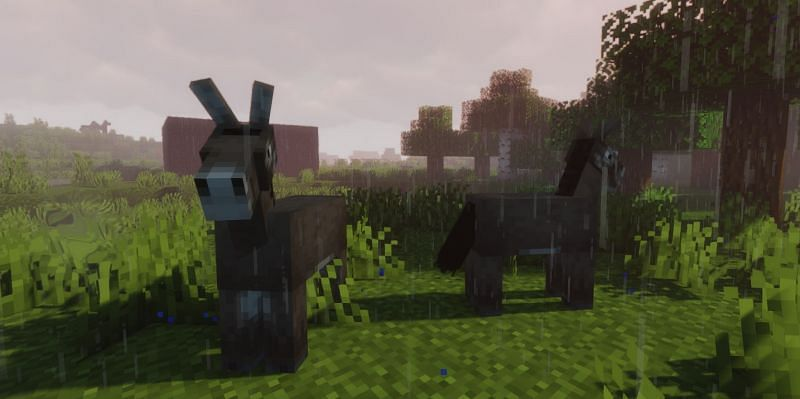 Shown: Two Donkeys in the grass (Image via Minecraft)