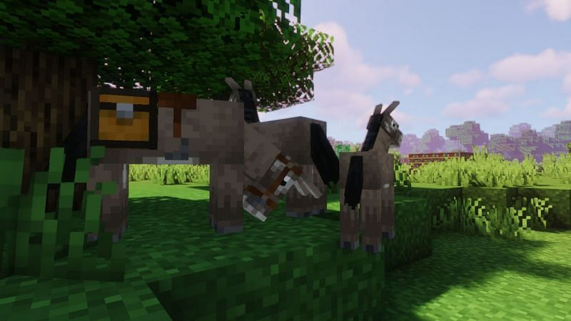 Shown: Two Donkeys and their child (Image via Minecraft)