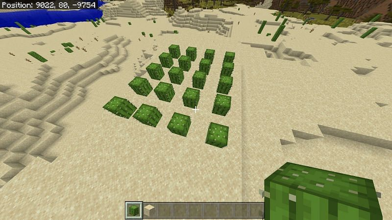 You will also want a little extra space to move between the cacti as well as prevent existing cacti from destroying each other after you break it apart.
