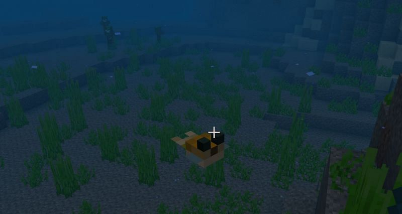 How to find Pufferfish in Minecraft