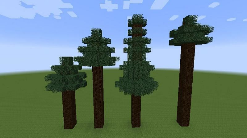 Spruce trees in Minecraft (Image via Minecraft.gamepedia)