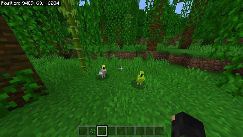 Spawning of Parrots in Minecraft