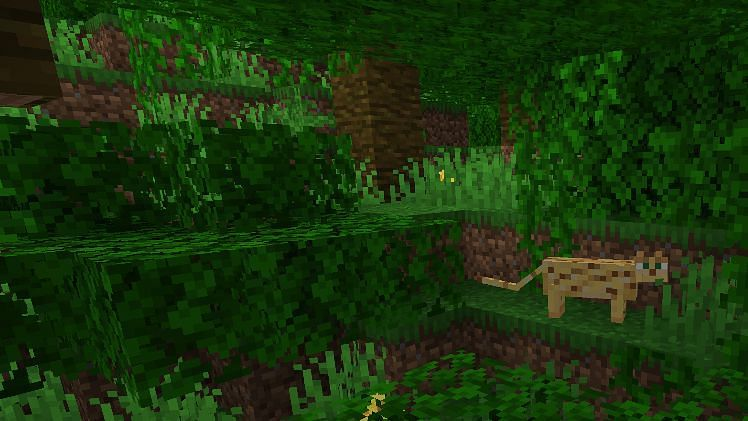 Bamboo can be found growing naturally in the jungle biome in Minecraft (Image via Minecraft)