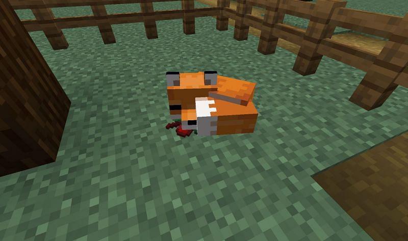 Minecraft fox sleeping under a tree (Image via Reddit)