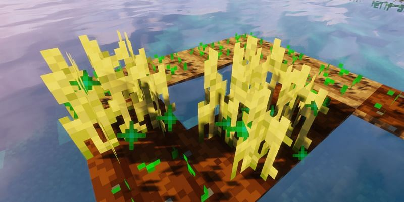 Two bone meal were used on the two Wheat shown (Image via Minecraft)