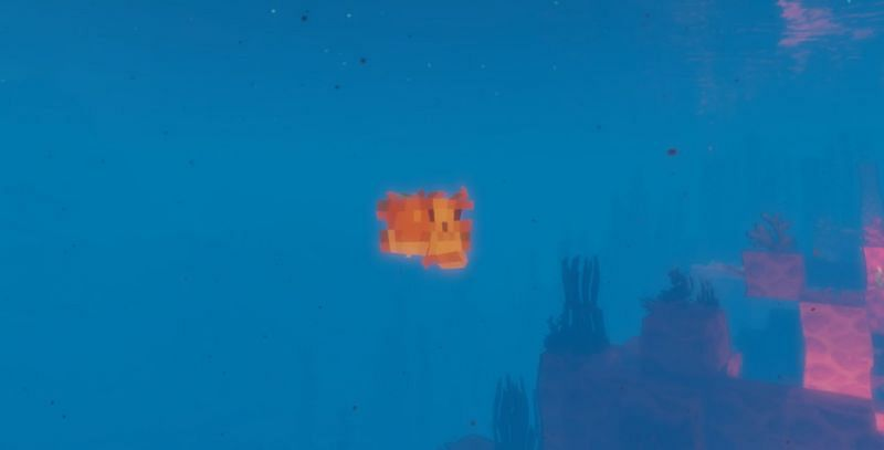 Pufferfish only spawn naturally in the Warm and Lukewarm Ocean biome variants in Minecraft (Image via Minecraft)