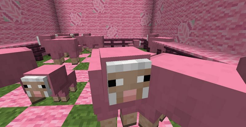 Pink sheep (Image via Minecraft)