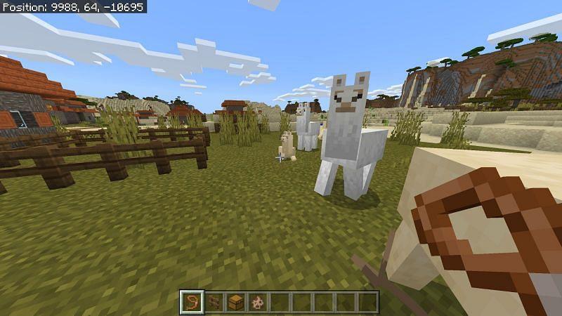 Leading untamed llamas in Minecraft
