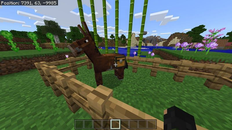 Mules can also be equipped with a chest to hold 15 slots of inventory