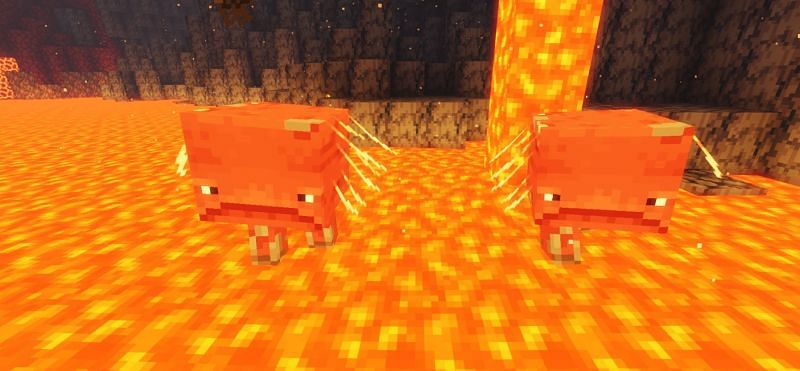 Shown: Two Striders wading through a pool of lava (Image via Minecraft)