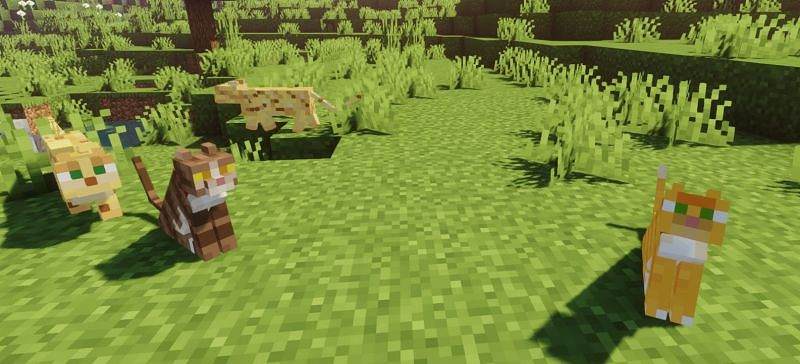 Shown: Some cool Cats... and Ocelots (Image via Minecraft)