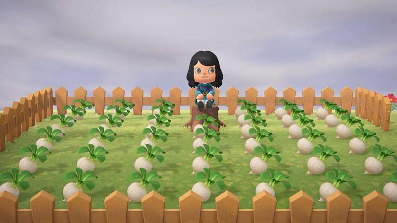 (Image via Nintendo world)