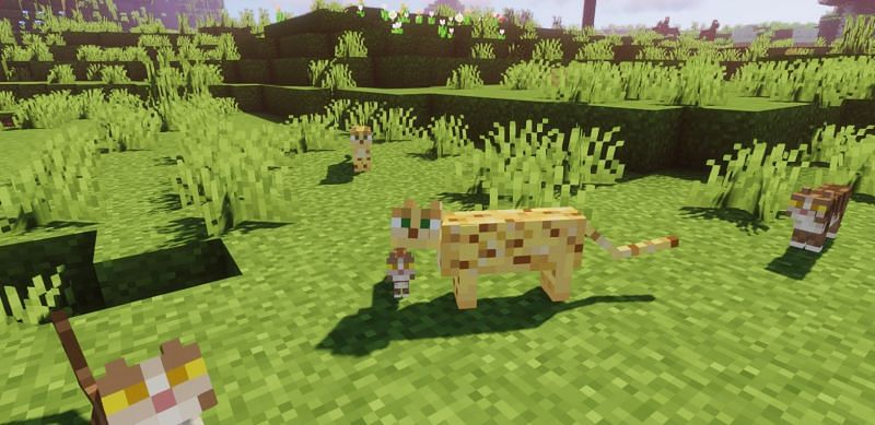"Shown: Both Ocelots and Cats are considered ""Kitties"" (Image via Minecraft)"