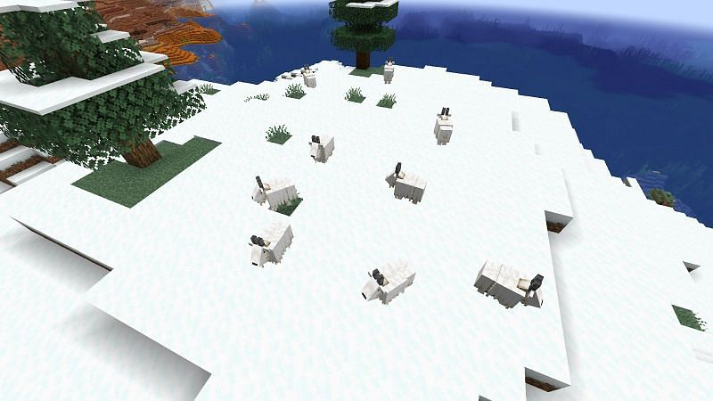 Spawning of Goat in Minecraft