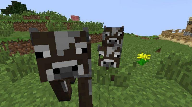 Happy cows! (Image via Minecraft)