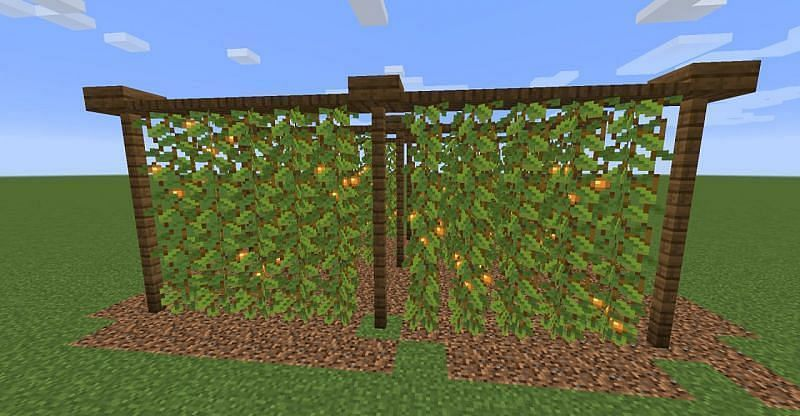 Glow Berries will arrive in Minecraft with the vast 1.17 update