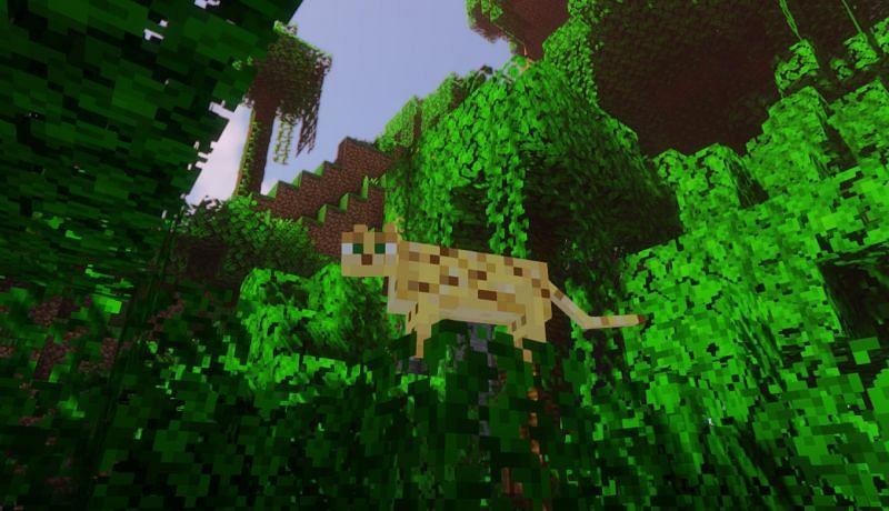 An Ocelot in his natural habitat (Image via Minecraft)