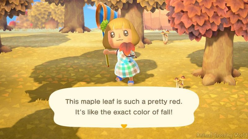 Maple Leafs will start spawning from the middle of the month (Image via Animal Crossing world)