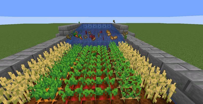 Harvesting farm (Image via Minecraft)
