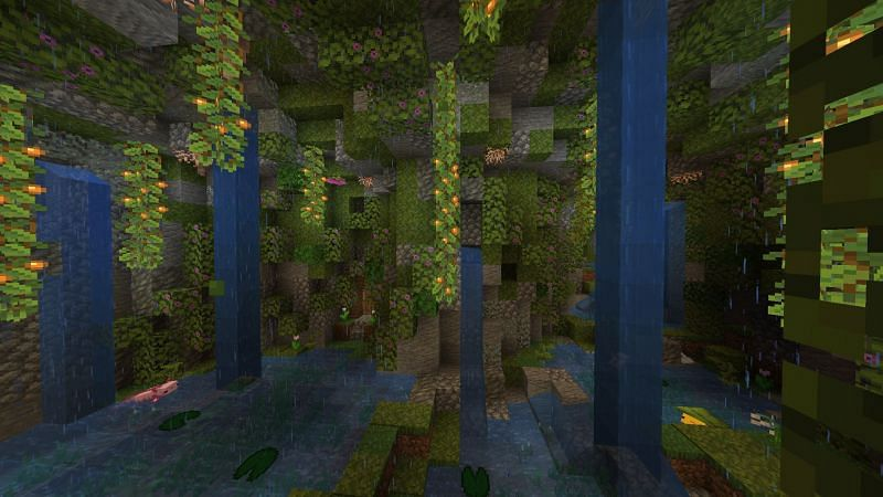 Cave vines in their natural habitat of lush caves