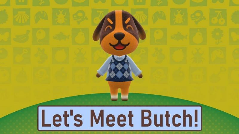 Everything you need to know about Butch in Animal Crossing: New Horizons (Image via Pen Jen Plays)