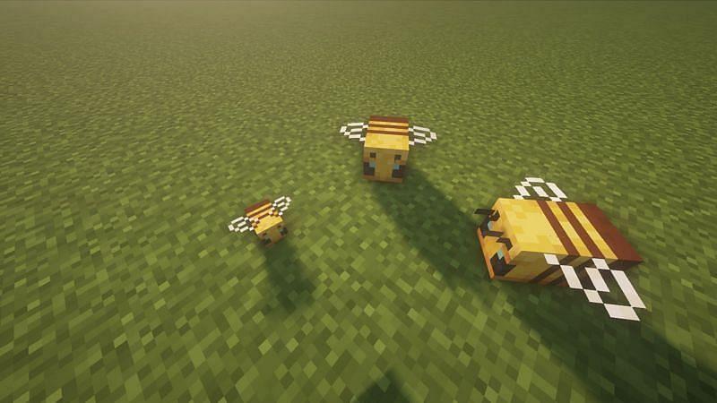 Dos abejas con su bebé (Imagen a través de Sportskeeda)