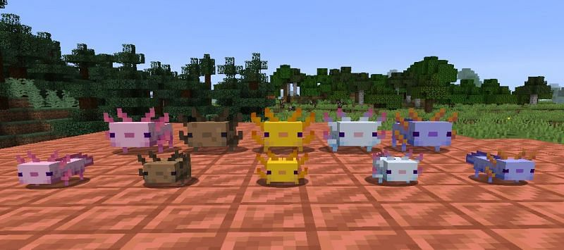 All axolotl color variations and their babies in Minecraft (Image via Reddit)