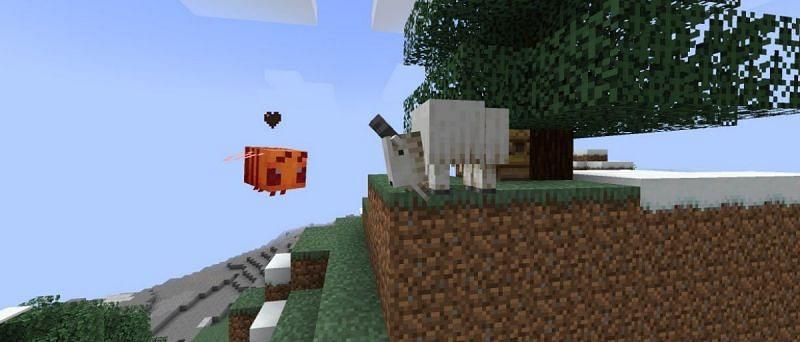 Did Goat attack a bee? (Image via Mojang)