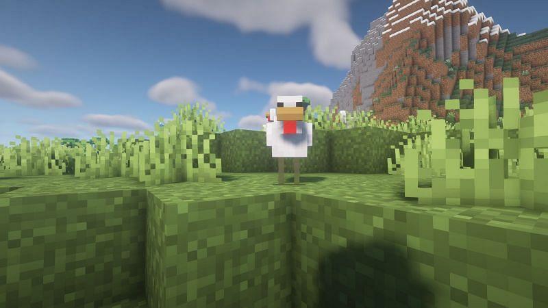 Chicken mirando al jugador (Imagen a través de Minecraft)