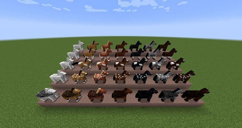 Varieties of horses (Image via Minecraft Wiki)