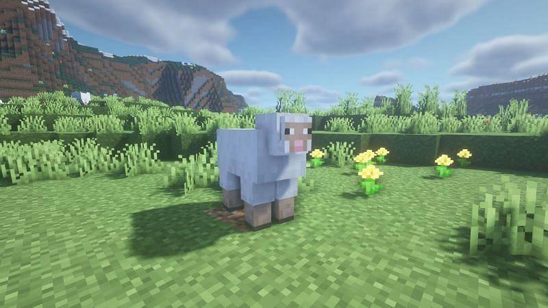 Oveja posando para una foto (Imagen a través de Minecraft)