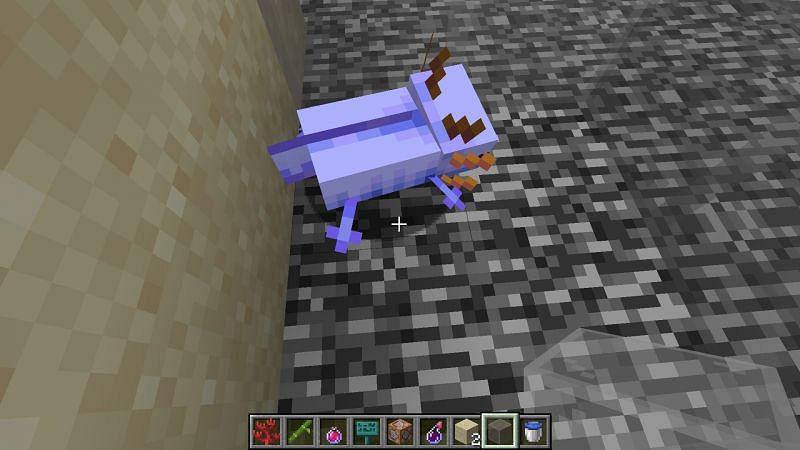 The elusive blue axolotl. Image via Jira Minecraft