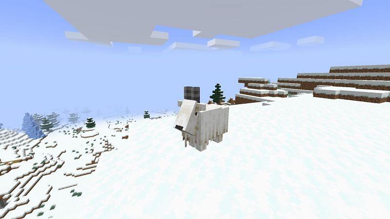 A Goat on snowy mountain (Image via Minecraft)