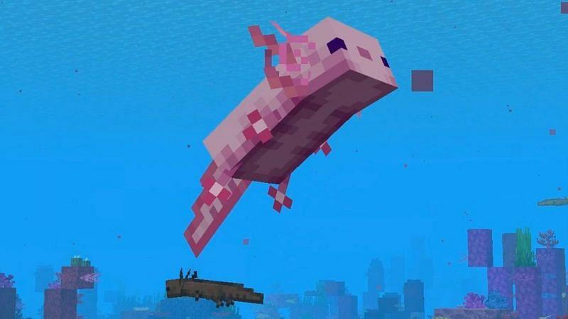 A happy-looking axolotl swimming with his buddies in Minecraft (Image via Mojang)