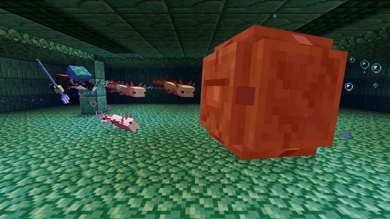 Axolotls attacking elder guardian (Image via Mojang)