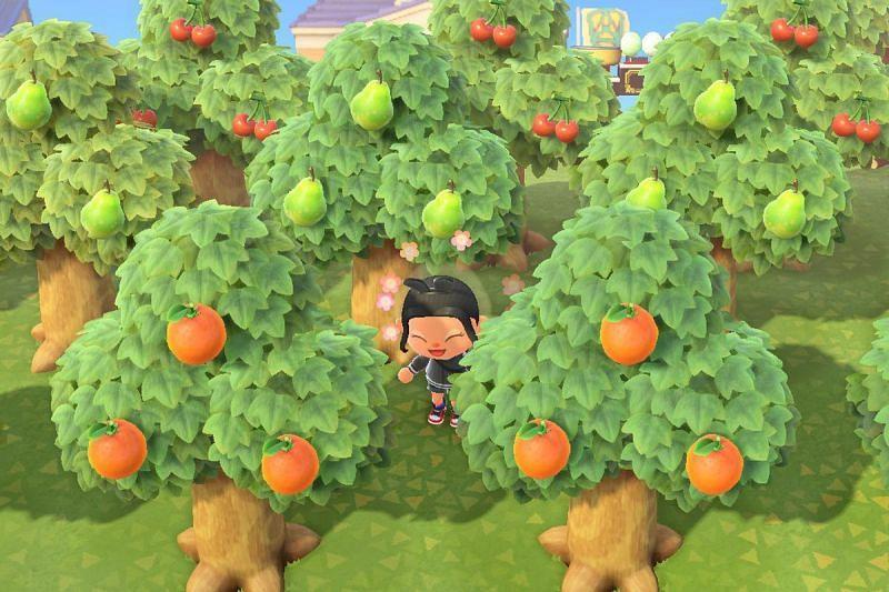 Árboles en Animal Crossing (Imagen a través de Polygon)