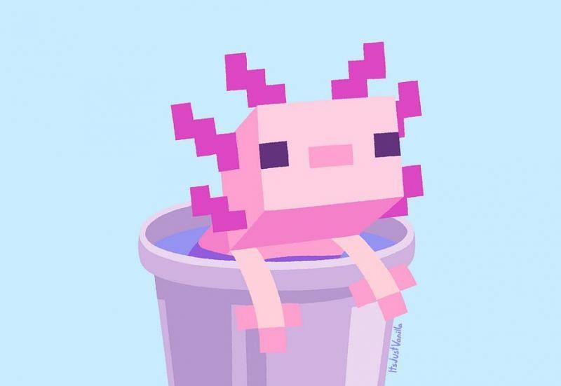 A cute little Axolotl in a bucket (Image via u/ItsJustVanilla on Reddit)