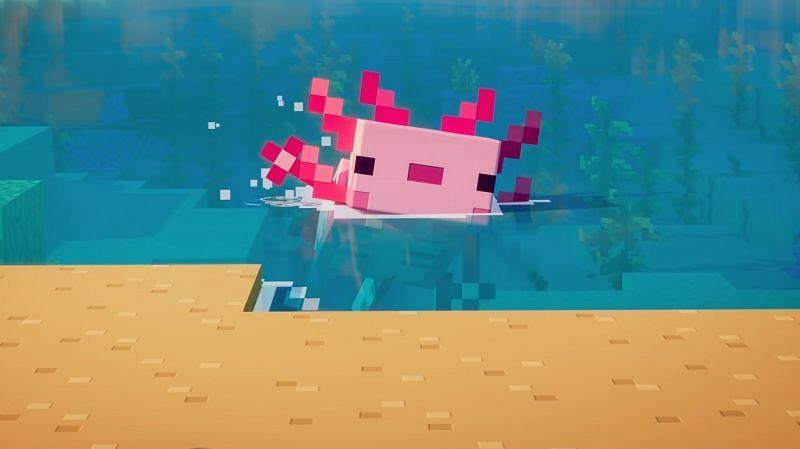 Axolotls in Minecraft Java Edition: Uses, spawning behavior, colors and more - Sportskeeda