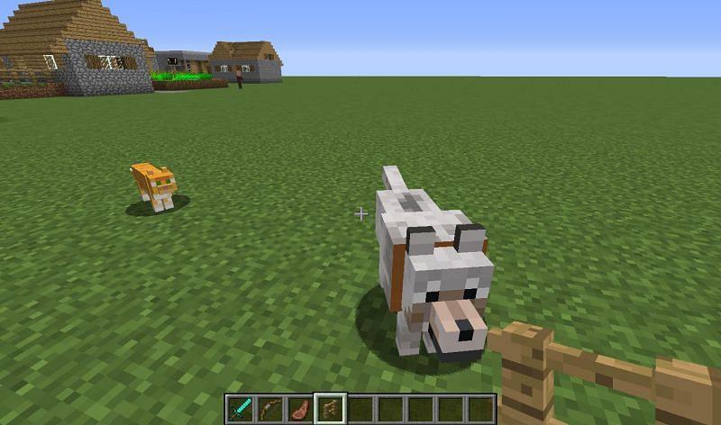 Un loup et un chat (Image via Mojang)
