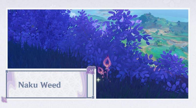 Naku Weed in Genshin Impact 2.0 (Image via Mihoyo)