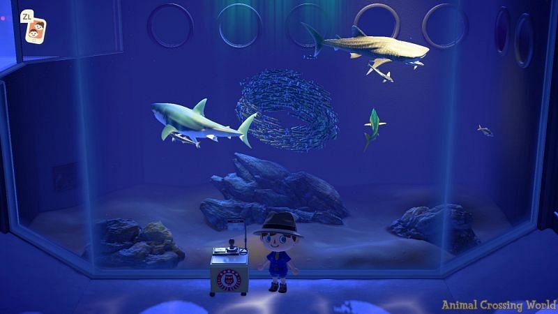 Animal Crossing museum. Image via Animal Crossing World