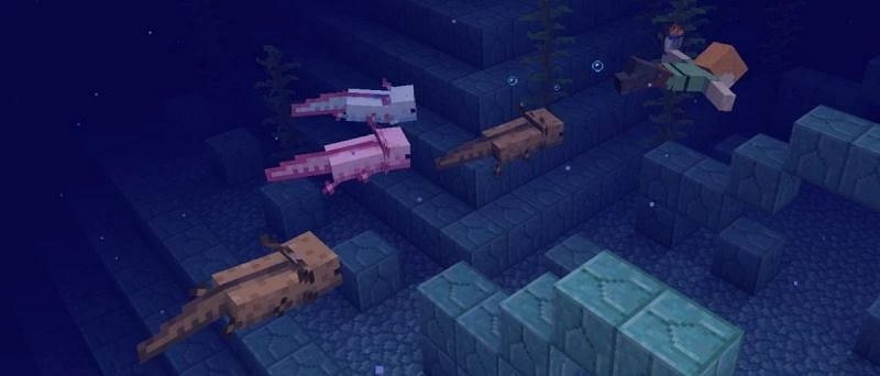 Axolotls are one of the new mobs added to Minecraft (Image via Mojang)