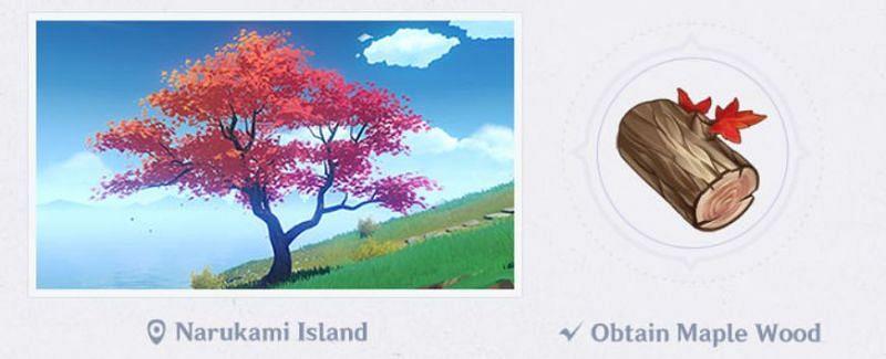 Maple Wood in Genshin Impact 2.0 (Image via Mihoyo)